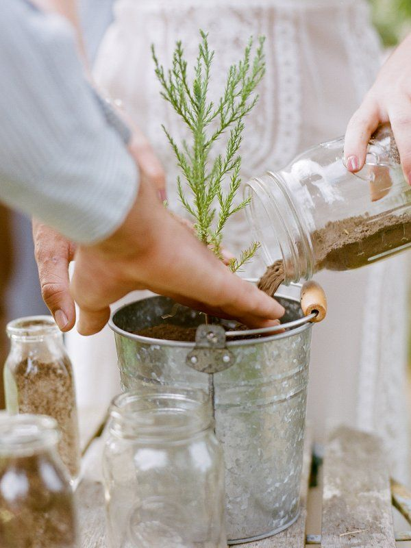 Plant a tree during your wedding ceremony to signify the beginning of you new life together!