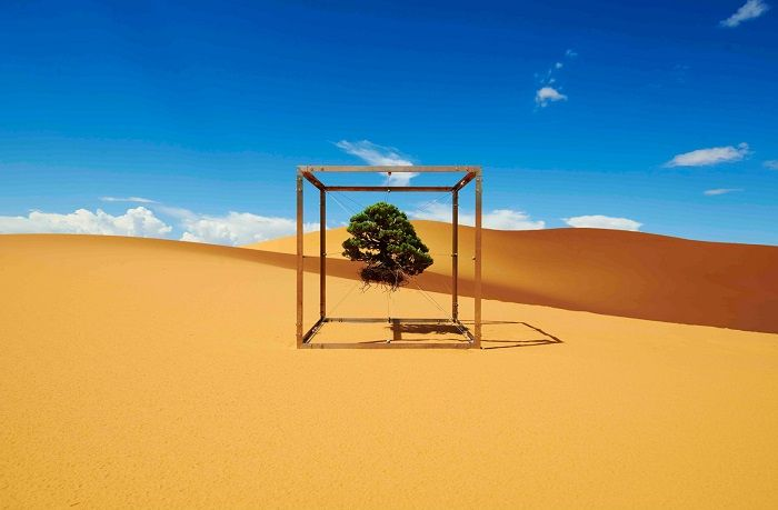 自然の風景を切り取り、一定の枠におさめる「盆栽」。 フラワーアーティストの東信さんが、盆栽をワールドツアーへと […]
