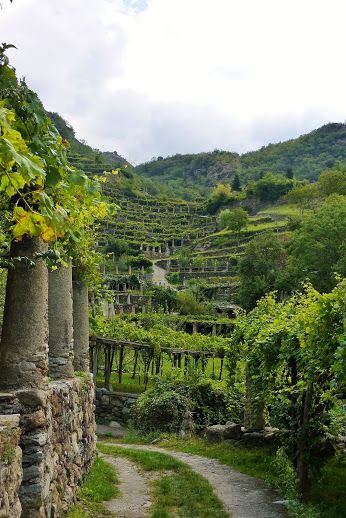 Carema, where you can take a beautiful hiking trail through their terraced vineyards. Piemonte, Italy