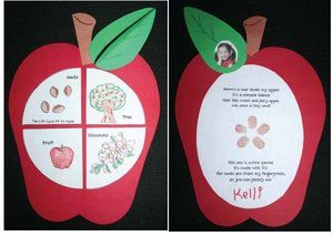 FREE Life Cycle of an Apple printables.  The seeds are finger prints.