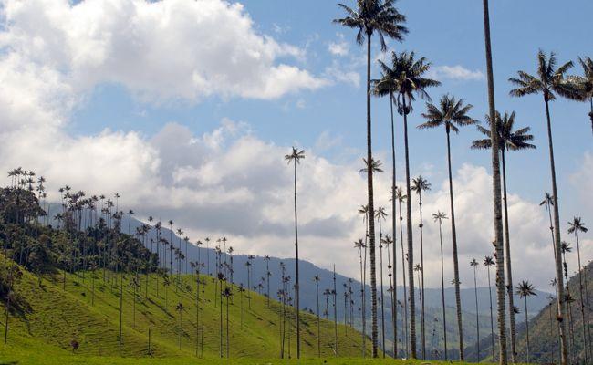 Valle del Cocora, #Colombia