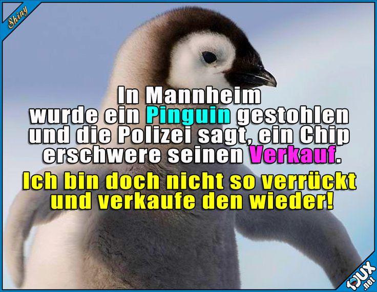 Lieber sofort zurückbringen, ich hoffe, ihm geht's gut ^^ Lustige Sprüche und Bilder #Humor #Sprüche #Pinguin #Mannheim #Nachrichten #niedlich #nurSpaß