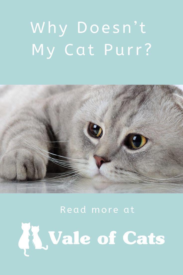 Why Doesn T My Cat Purr Cats Cat Behavior Raising Kittens