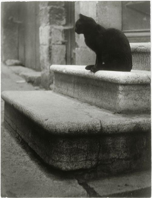 Brassaï  Le chat noir sur les marches (vers 1945)