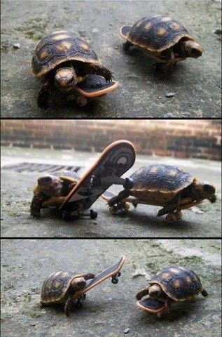 skateboarding turtles