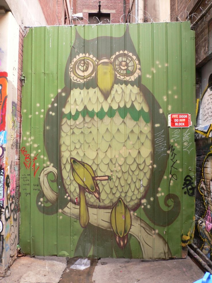 Melbourne's smoking owl - I used to live around the corner from this guy!