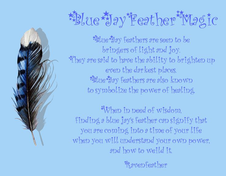 Blue Jay feather magic *Please check your local and federal guidelines for feather collection and possession!*