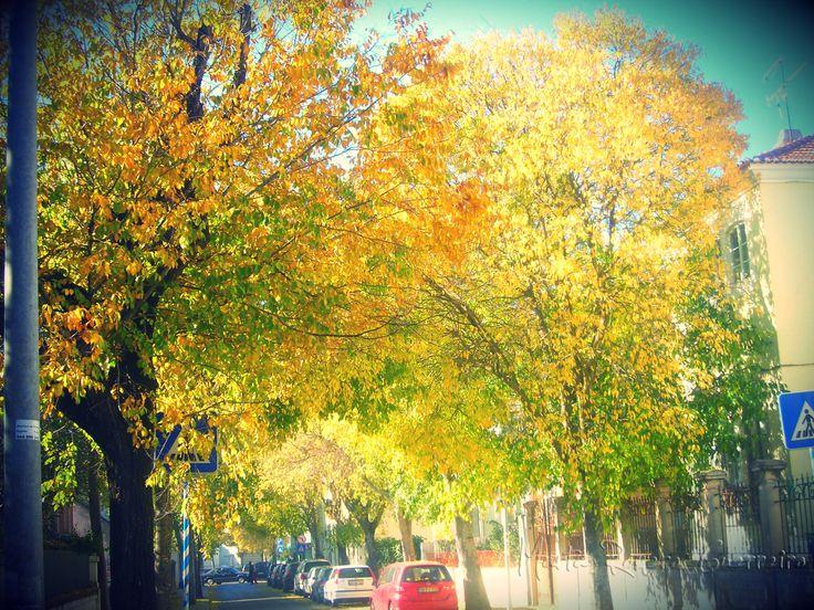 Autumn - Santo Amaro de Oeiras - Portugal