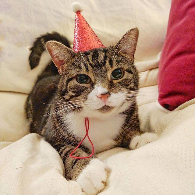 Allen the cat in a hat!