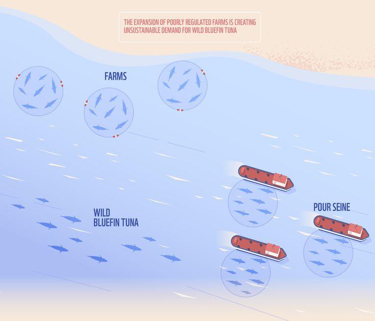 Atlantic Bluefin Tuna - WWF Med on Behance