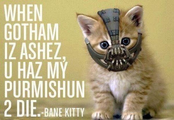 Kitten bane!! hahaha!!: Bane Kitty, Banecat, Banekitti, Funny Stuff, Batman, Kittens, Dark Knights, Bane Cat, Animal