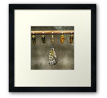 Just Born Butterfly Framed Print