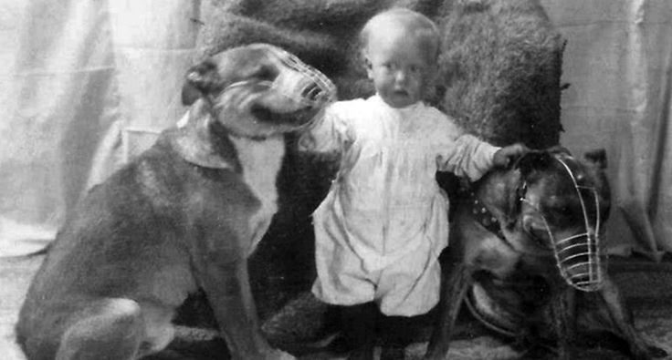 Pitbulls used to be considered the perfect 'nanny dogs' for children — until the media turned them into monsters