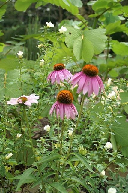 In my herb garden