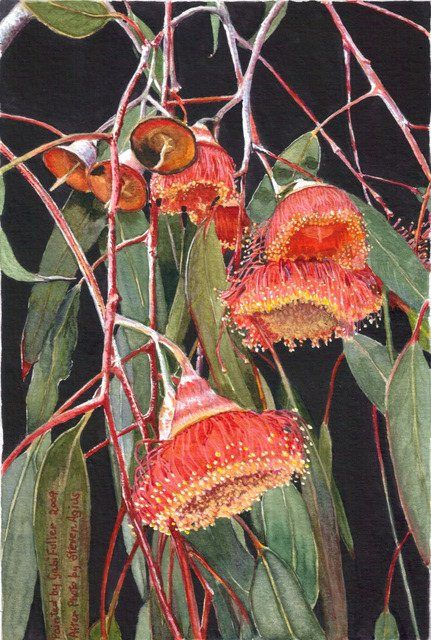 Gum Blossoms by Gabi Fuller