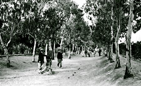 Jeux de boules au Jardin public. Jardin public de Sfax. http://www.sfax1881-1956.com/Picville/jpublic.htm