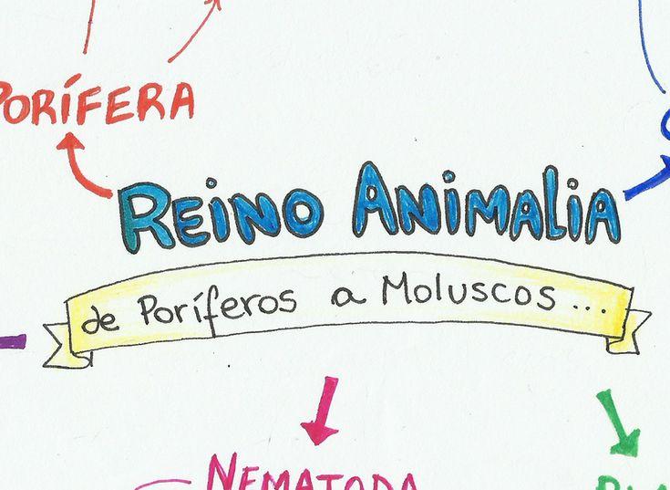 Com este mapa mental, aprenda tudo sobre o Reino Animal, de Poríferos a Moluscos, para arrasar na sua prova e nos vestibulares!