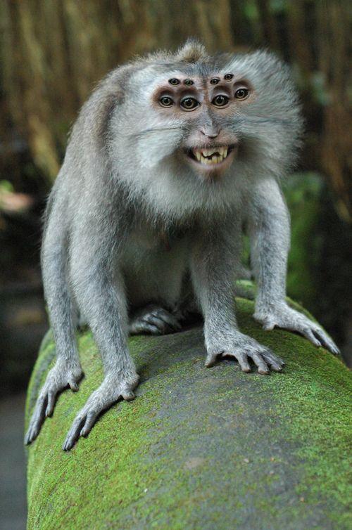 Spider Monkey | Chimera/Hybrids #7 | Smiling animals ...