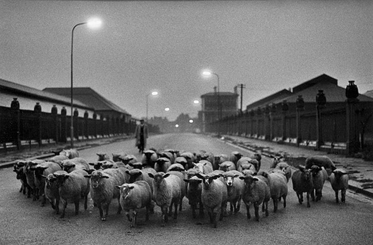 Don McCullin's Sheep to Slaughter, 1958.