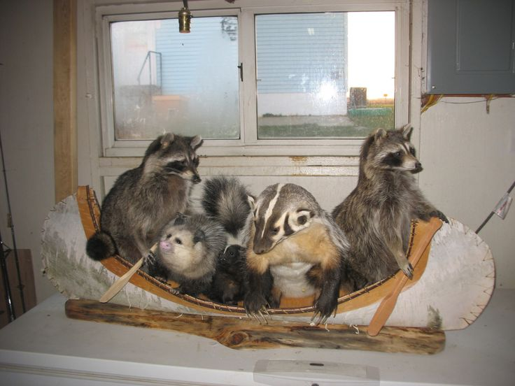 Taxidermy 2 raccons 1 skunk 1 badger 1 opossum Fur Bear Jamberie in birchbark canoe New log home decor. $2,400.00, via Etsy.