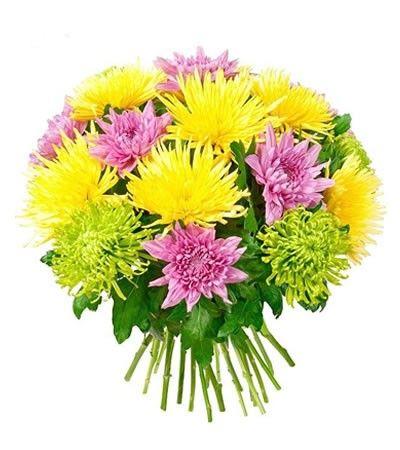 Букет состоит из 15 разноцветных хризантем  http://www.dostavka-tsvetov.com/shop/32/desc/nastroenie