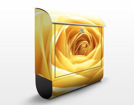 #Briefkasten mit #Zeitungsfach - #Lovely Yellow #Rose - #Briefkasten #Rosen #Rosengarten #Blumen #Dornen #Liebe #Wandgestaltung #Dekoidee