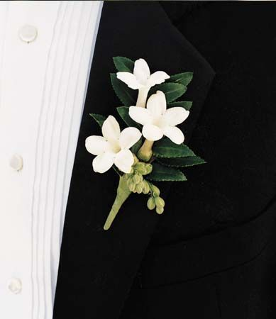 """Flower recommended for June Bride ** How about a pretty wedding using """"Jasmine""""?  Image introduced in ♡"""