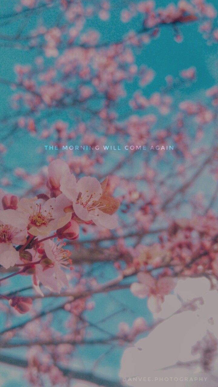 Plum Blossom Wallpaper Bts Quotes Blossom Wallpaper Bts Flowers Bts Spring Day Coolest wallpaper flower with quotes