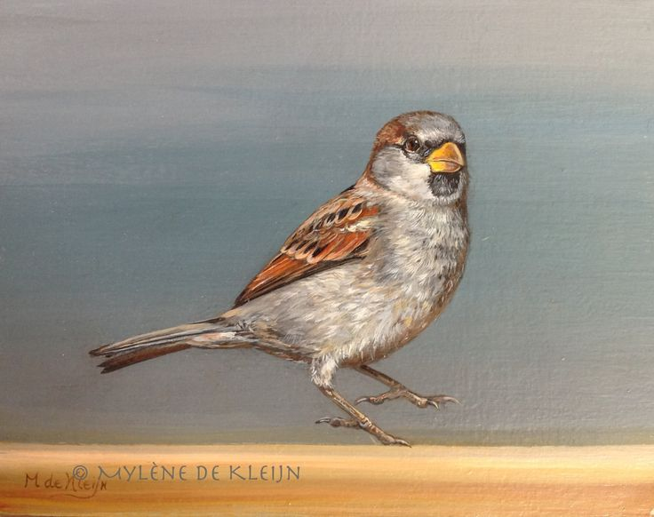 sparrow, small oil painting