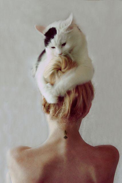 put a cat on