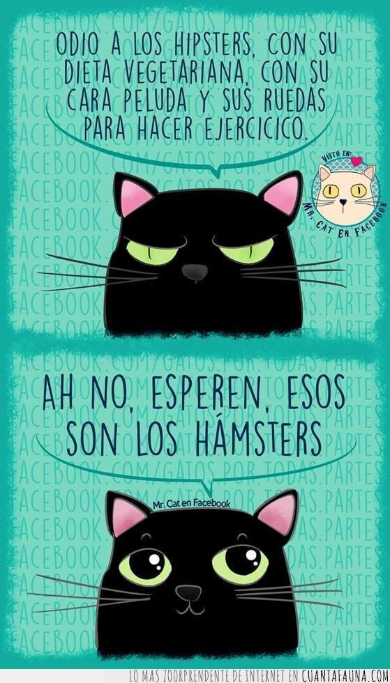 466 Best Spanish--Chistes Images On Pinterest  Cat Lovers -1128