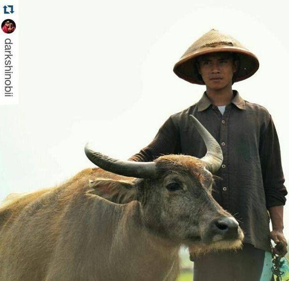 Foto kiriman @Darkshinobii Kerbau, binatang ini sangat membantu, khususnya bagi para petani2... #AnimalLoversEMCO