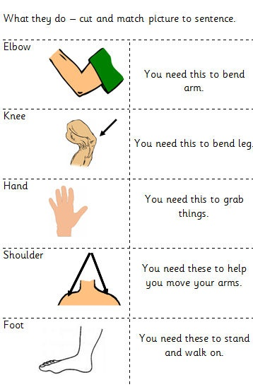 Contains worksheet - label parts of the body: head, neck, shoulders, arms, elbows, hands, chest, waist, legs, knees and feet. A list of words is also available. A body to cut out for student to put together. Can be used as a body lotto game. Sheet of body part pictures with sentences to match. Can be used as pairing games i.e. snap, memory game etc. Worksheet with 5 questions. Writing frame with each question. Another sheet with pictures to aid in answering questions.