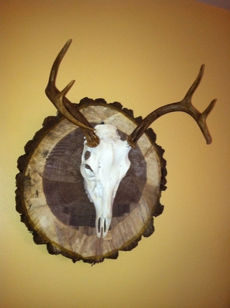 12 best taxidermy images on Pinterest | Deer mounts, Deer skulls and ...