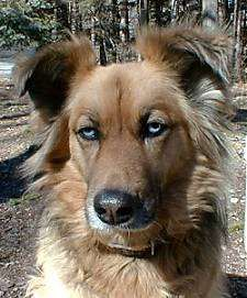 Mongrel = Mixed Breed Dogs – Mutt or Mutts......beautiful!!!