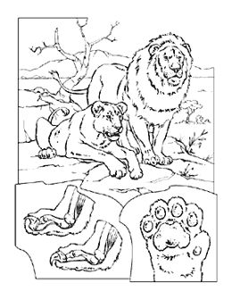 43 best Coloring Pages for Me for Kids WHATS THE DIFFERENCE