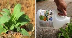 17 surpreendentes truques de jardinagem: para combater pragas e doenças e…