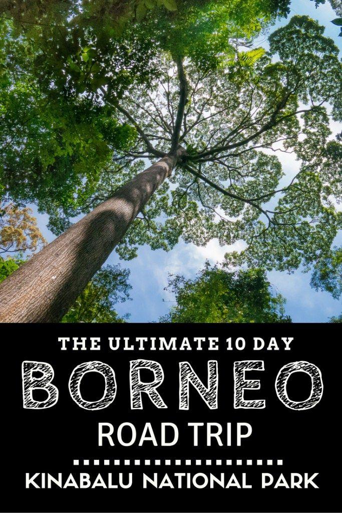 The Ultimate 10 Day Borneo Road Trip: Kinabalu National Park http://finelinedrivingacademy.co.uk