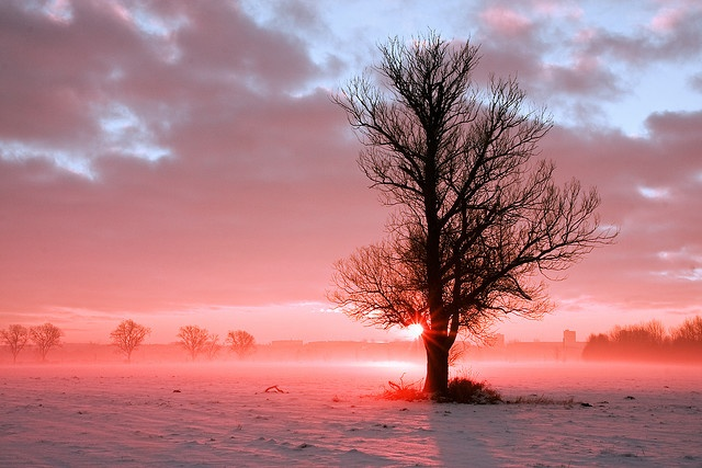 RISE 'N SHINE by K. Enderlein: Impressive Photos, Nature Pictures, Landscape Photography, Pink, Trees Sunsets, Impressions Photo
