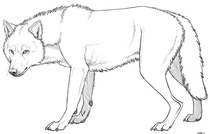 Line Drawing Wolf : Wolf line art pinterest inspiration