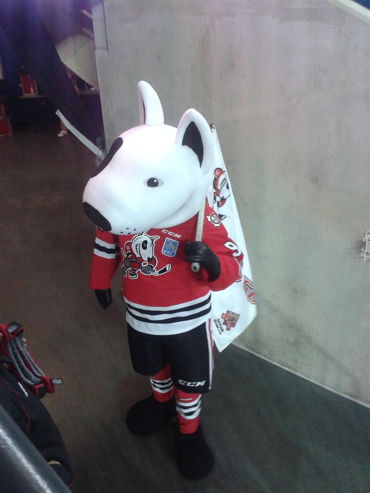 Loonie Times Custom Mascots- Our friend 'Bones' getting the crowd pumped at a Niagara Ice Dogs Game !