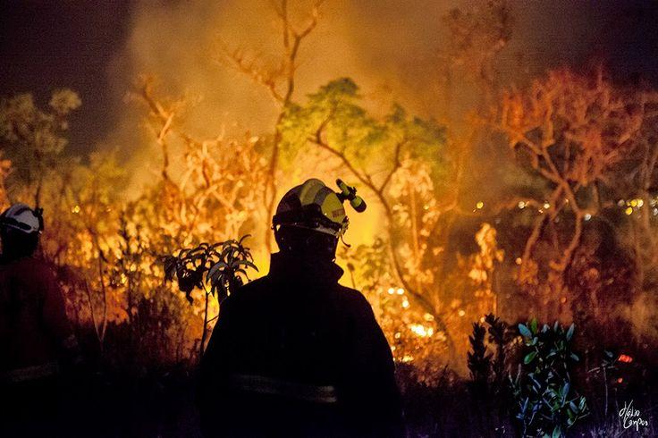Hélio Campos | Fotografia: Bombeiros | Incêndio Florestal proximo ao Parque N...