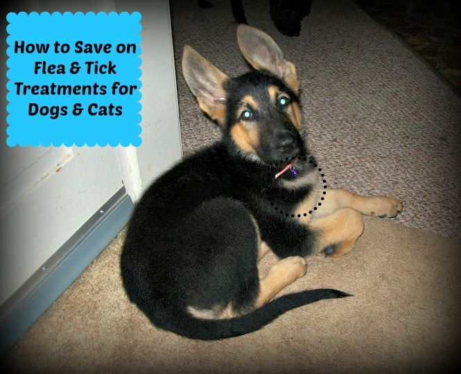 Save money on flea & tick medicines for dogs #dogs #frugal #pets