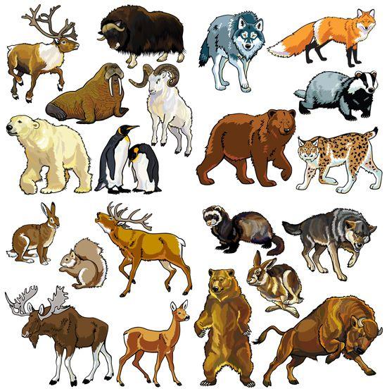 Állatok Európában és az Északi-sark