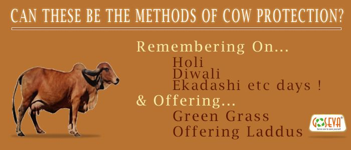 Can These Be Methods To Protect Mother Cow ?