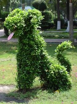 happy-dog-topiary.