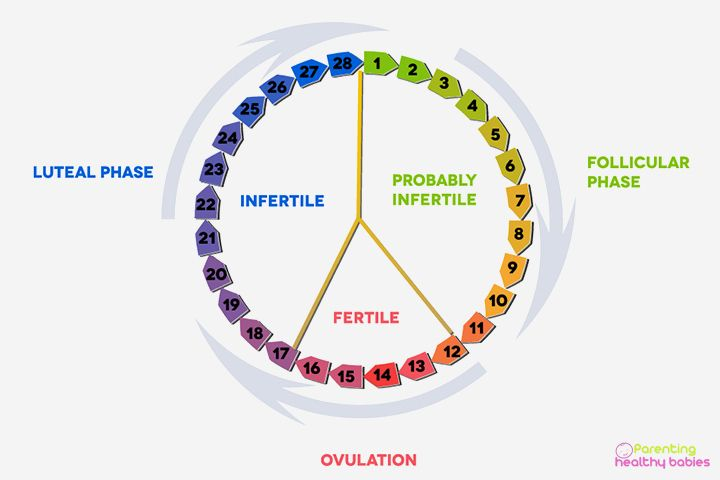 Ovulation Chart- Best Way to Track Your BMI and Cervical