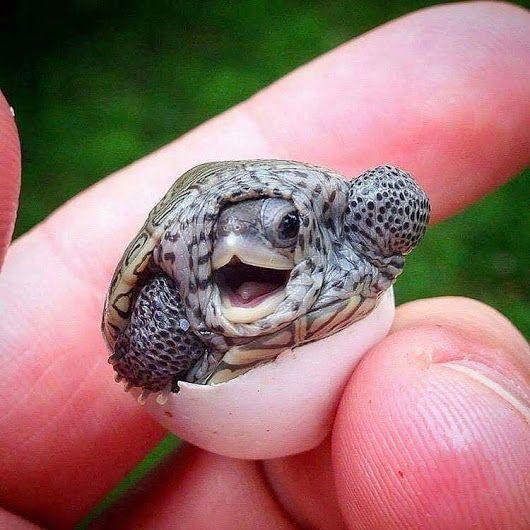 I think it's a baby diamondback ... ??!