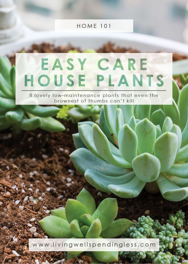 8 Low-Maintenance, Easy Care Houseplants. Great for beginners! via @lwsl #plantlady #plant101 #indoorplants