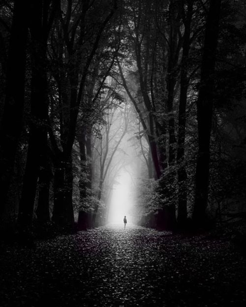 Gallery Image Of The Day: Into The Light by @martijn_kort Submit your work to http://ift.tt/2yucg4E  #blackandwhite #blackandwhitephotography #monochrome #landscapes #forests #trees #photography  via Digital Photo Pro on Instagram - #photographer #photography #photo #instapic #instagram #photofreak #photolover #nikon #canon #leica #hasselblad #polaroid #shutterbug #camera #dslr #visualarts #inspiration #artistic #creative #creativity